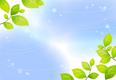 平成24年12月22日(土)変わってきたよ桜島の緑